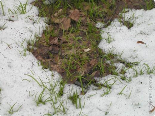 """Десять дней отдыхала в санатории """"Краинка"""" Тульской области. Когда приехала - загрустила... Совершенно невыразительное место, даже сфотографировать нечего... Но потом огляделась - весна идет! фото 17"""