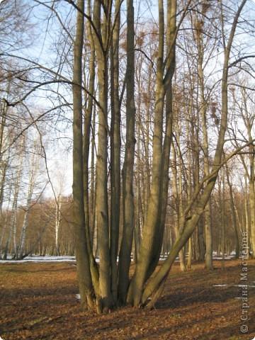 """Десять дней отдыхала в санатории """"Краинка"""" Тульской области. Когда приехала - загрустила... Совершенно невыразительное место, даже сфотографировать нечего... Но потом огляделась - весна идет! фото 18"""