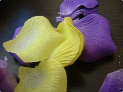 цветы фото 7