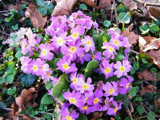Наконец-то весна! фото 5