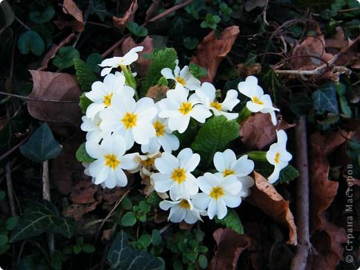 Наконец-то весна! фото 6