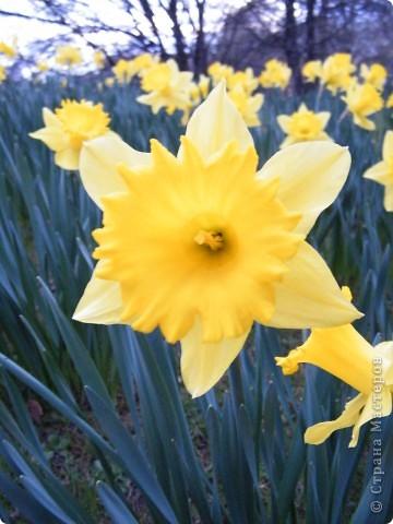 Наконец-то весна! фото 9