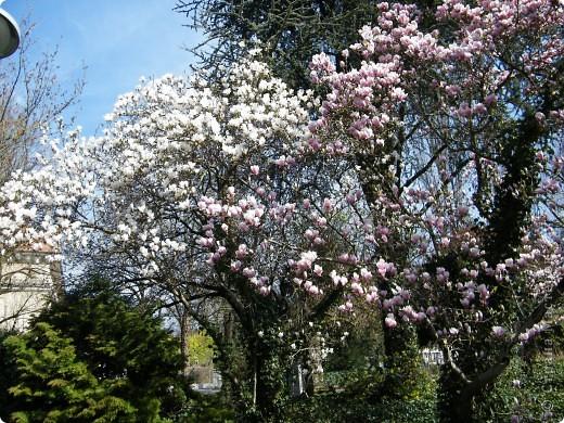 Наконец-то весна! фото 11