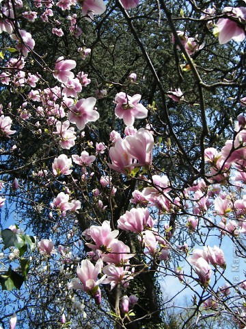 Наконец-то весна! фото 14
