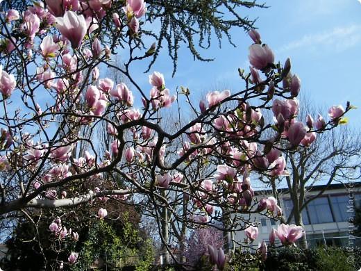 Наконец-то весна! фото 15