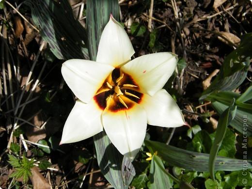 Наконец-то весна! фото 17