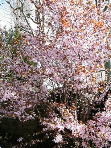 Наконец-то весна! фото 18