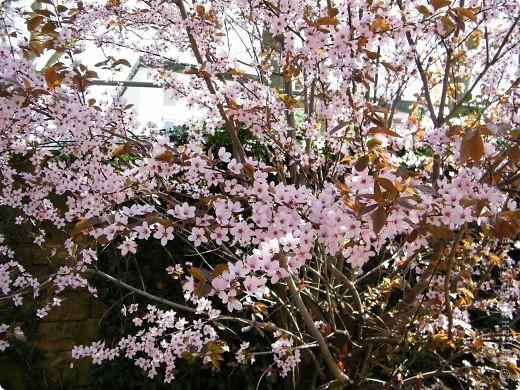 Наконец-то весна! фото 19