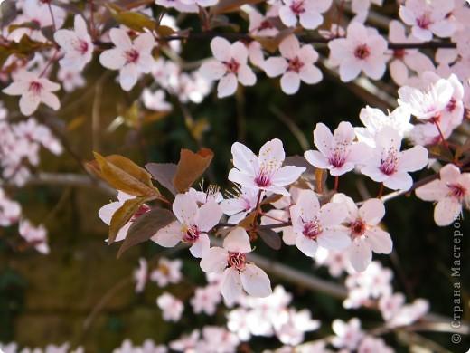 Наконец-то весна! фото 20
