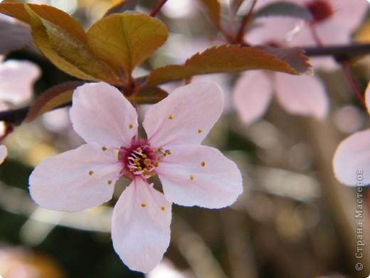 Наконец-то весна! фото 21
