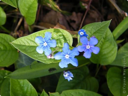 Наконец-то весна! фото 23