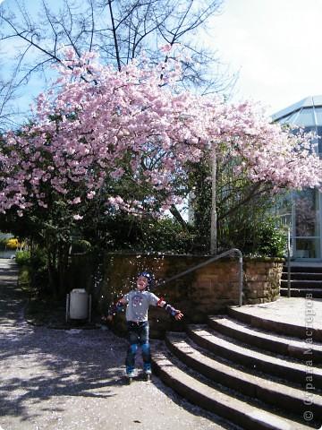 Наконец-то весна! фото 4