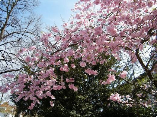Наконец-то весна! фото 3