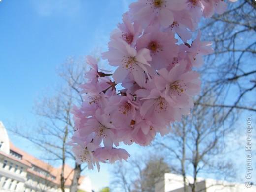 Наконец-то весна! фото 1