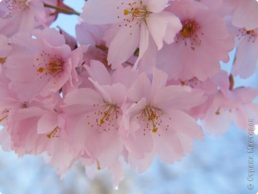 Наконец-то весна! фото 2