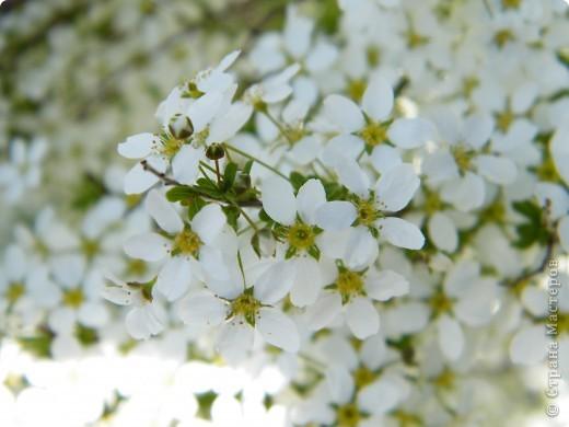 Наконец-то весна! фото 26