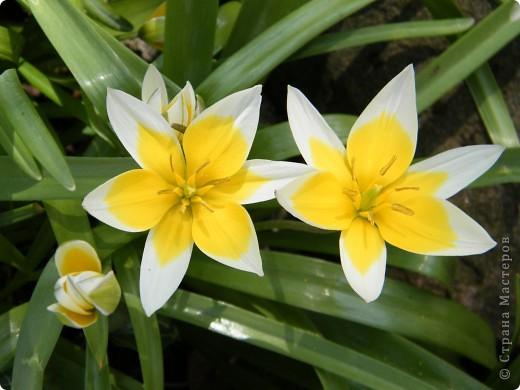 Наконец-то весна! фото 28