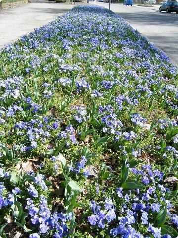 Наконец-то весна! фото 29