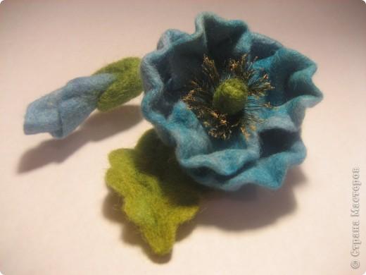 Голубой мак (меконопсис) фото 5