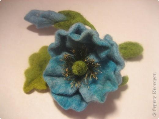 Голубой мак (меконопсис) фото 4