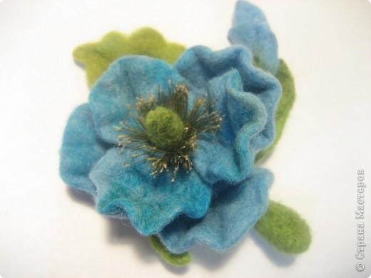 Голубой мак (меконопсис) фото 3