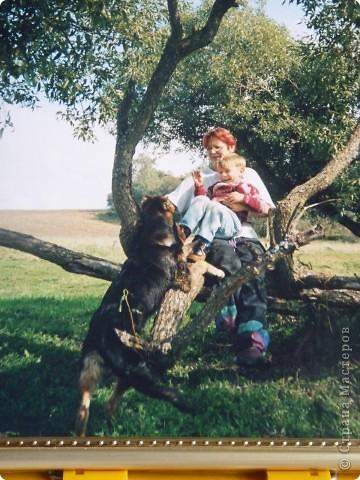 На прогулке с собакой фото 1