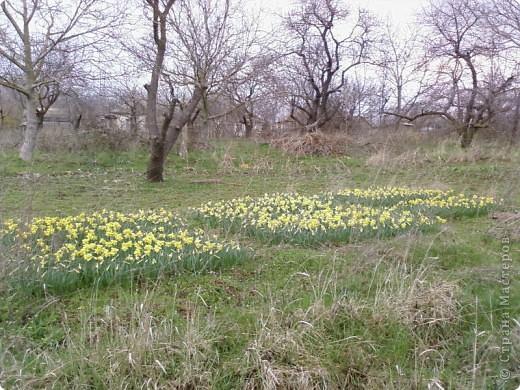 Вот обещанный мной фоторепортаж. Насмотрелась на холодную весну в России, и захотелось показать малую часть той красоты весны, которая сейчас есть в Крыму. Это верба, фотографировала в Феодосии, уже вся зацвела, почти не найти такую, чтобы была не опыленной, чувствую в этом году на вербное воскресенье не видать нам вербы, будет, наверное, очень дорого стоить... фото 16