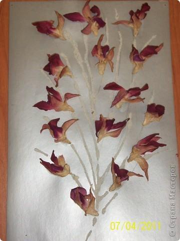 Сушеные цветы и манная крупа фото 1