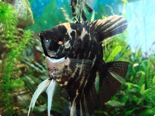 Рыбка-ночка. Сделана по заказу. фото 9