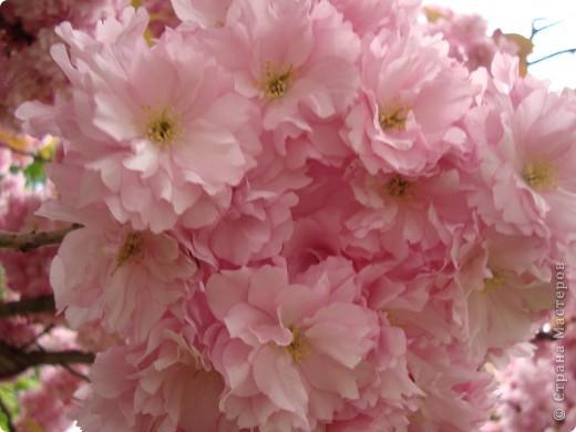"Кусудама цветочная. Идея от ""Приветик"" .  фото 5"