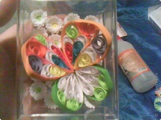 Бабочка. фото 1