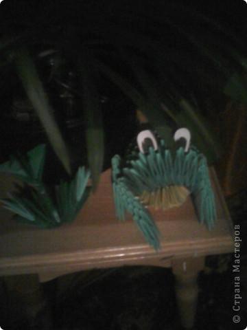 лягушка в траве фото 2