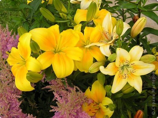 Фотографии цветов фото 5