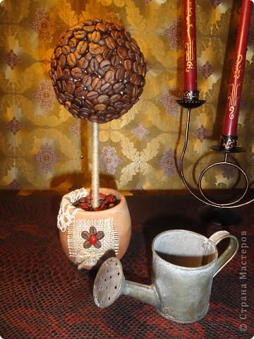 Кофейное дерево!