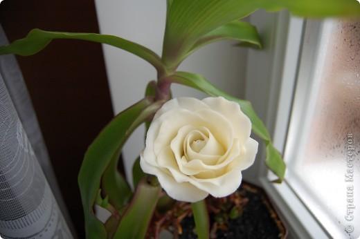 """Моя первая роза из самодельного """"холодного фарфора"""". фото 1"""