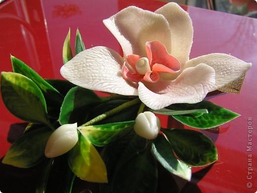 Орхидея для комплекта фото 3