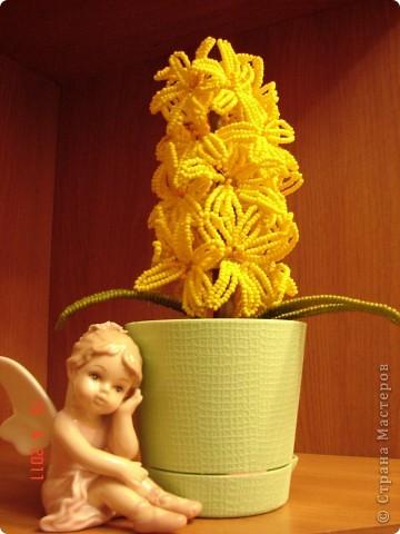 """Всем добрый вечер! Представляю Вашему вниманию свою первую работу в технике бисероплетения """"Цветок гиацинт"""". На эту работу израсходовано примерно 230гр желтого бисера №11, 5гр -оранжевого, 10гр - зеленого , примерно 90м проволки, один горшок, флористическая лента, гипс для заливки, и немного черного чая -заварка (для имитации земли). Врмя выполнения работы примерно 4дня.  фото 1"""