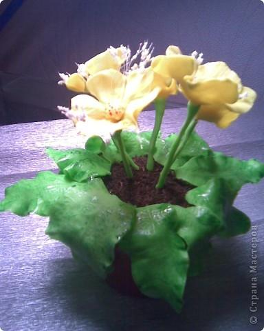 """Цветы непонятной """"породы"""" фото 2"""