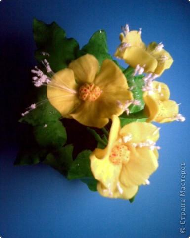 """Цветы непонятной """"породы"""" фото 3"""