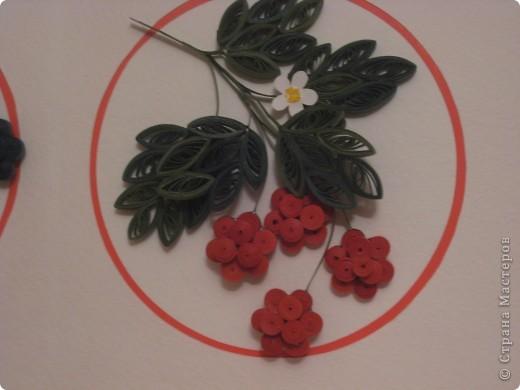 ягода фото 3