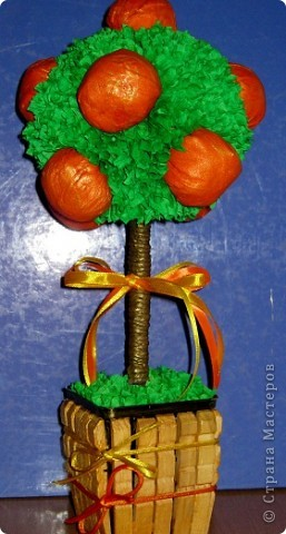 Новое мандариновое деревце фото 1