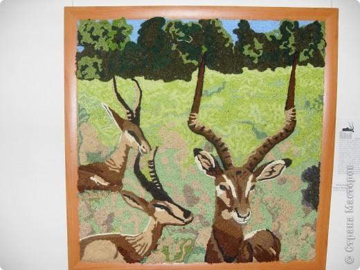 Вот с этих антилоп мы начали знакомство с выставкой. фото 1