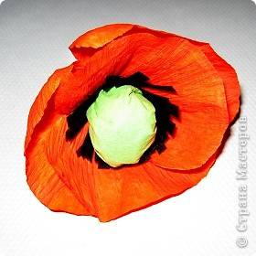 Так давно хотела попробовать сделать цветок мака. фото 8