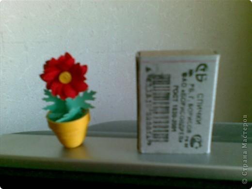 мини-цветы фото 5