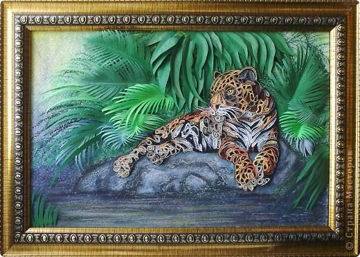Леопард фото 17