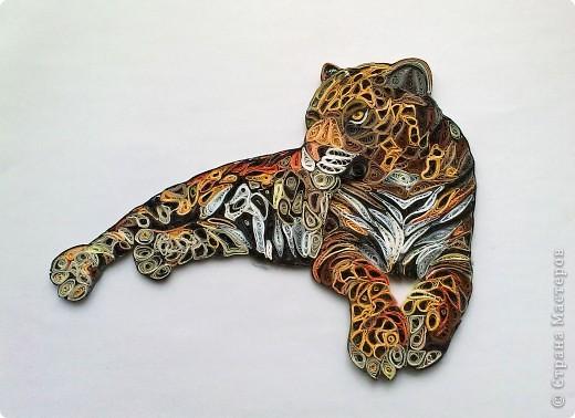 Леопард фото 5