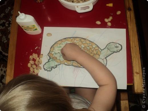 На распечатанный, раскрашенный  шаблон черепахи приклеиваем скорлупу от фисташек клеем ПВА фото 2