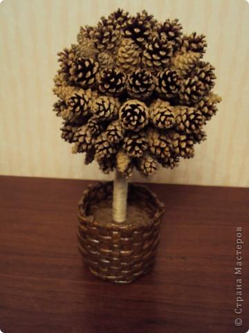 Шишковое дерево!!! фото 2