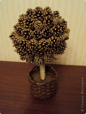 Шишковое дерево!!! фото 1