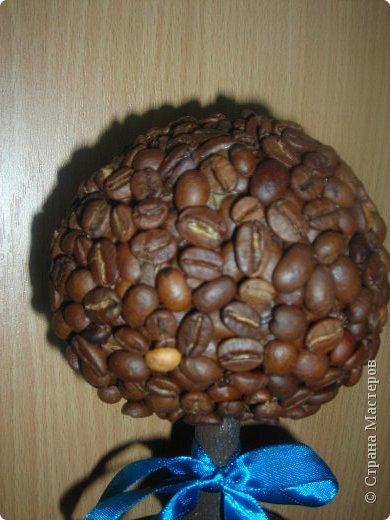 Эх, кофейное дерево! фото 2
